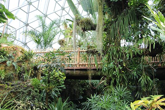 tarlton garners 2017 quality concrete award for makeover to bridge in climatron at missouri botanical garden st louis construction news and review - Botanical Garden St Louis